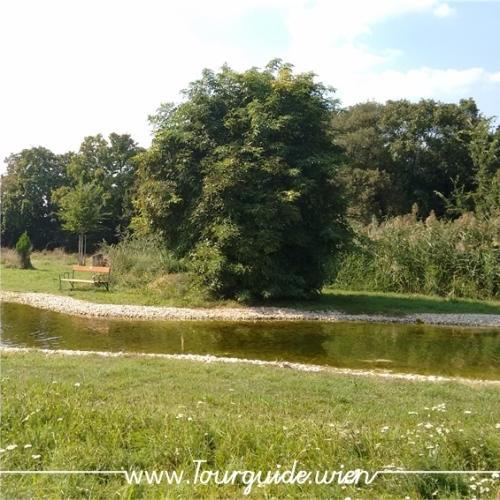 1110 - Zentralfriedhof, Naturgarten
