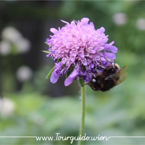 2734  - Schneeberg, Blume am Wegesrand 1